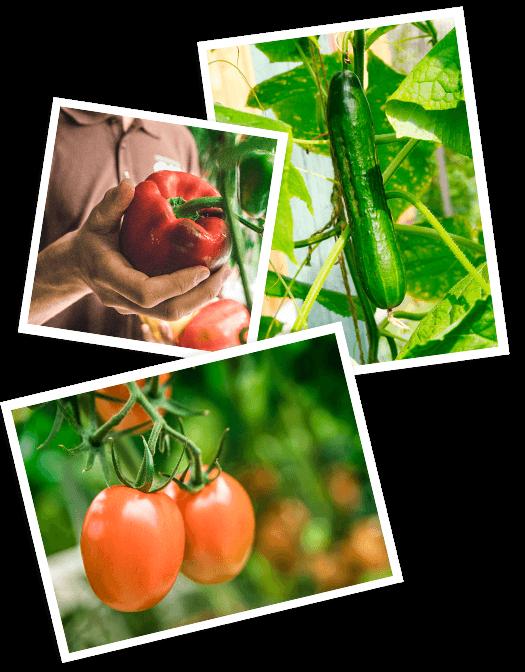 Eine Collage aus Bio-Schlangengurken, Bio-Paprikas und Bio-Tomaten